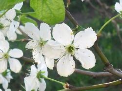Весна..._1
