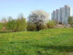 по следам весны_2