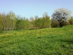 Весенний взгляд