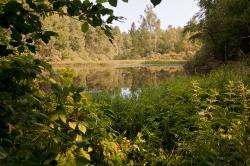 у лесного озера_3